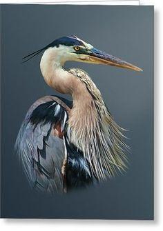 bird artwork - Great Blue Heron Poster Zazzle com Watercolor Bird, Watercolor Paintings, Photo Animaliere, Bird Artwork, Bird Drawings, Sea Birds, Wild Birds, Blue Heron, Colorful Birds