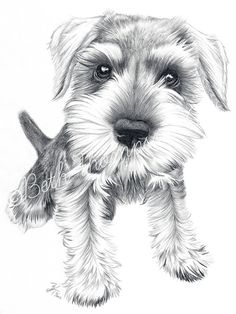 Schnozz  8x10 inch Art Print Schnauzer Dog by beththompsonart, $25.00