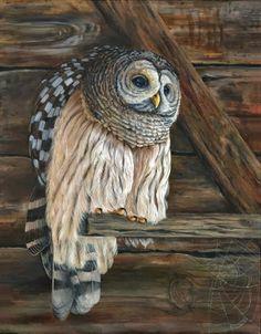 Tried Owl ~