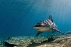 Подводный мир Брайана Скерри