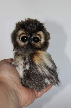 Ok, not fur, but still a sweet baby, owl named Shu By Averina Olesya - Bear Pile Baby Animals Super Cute, Cute Little Animals, Cute Funny Animals, Cute Dogs, Funny Owls, Silly Dogs, Cute Little Things, Fun Funny, Baby Animals Pictures