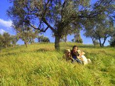 Dostlarımızı yeşil alanlarda bekleyen tehlike: Pisipisi otları Detaylar ajanimo.com'da.. #ajanimo #ajanbrian #hayvan #animal #dog #köpek #dogs #animal #animals #hayvan
