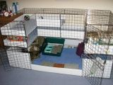 The Excellent Adventure Sanctuary. Buy The Right Size Guinea Pig Cage. Photo by maskarade Purchasing a guinea pig cage in a pet shop is unfortunately a good way to ensure that it is in fact too small for your pet's needs. Diy Guinea Pig Cage, Guinea Pig House, Guinea Pig Care, Bunny Cages, Rabbit Cages, Chinchillas, Guinie Pig, C&c Cage, Class Pet