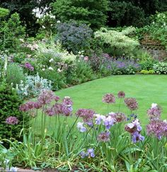 Herbaceous borders with Cornus alternifolia variegata and Rosa glauca in background with alliums in the foreground.