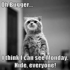 I think i can see Monday...
