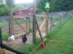 Chicken moat - Basically, a tunnel of wire for your chickens to roam in, which runs around the perimeter of your garden. like a chicken run that borders your entire garden area. The idea is that the chickens in the moat will catch many of th