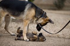 5 Dogs that are easiest to train, lets see if your dog made the list or not!