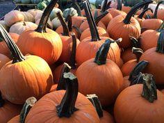 Pumpkin patch. Secret Gardens, Pumpkin, Vegetables, Food, Pumpkins, Veggies, Essen, Vegetable Recipes, Squash