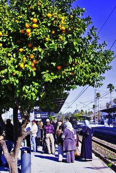 Orange tree at Train Station in Fes, Morocco