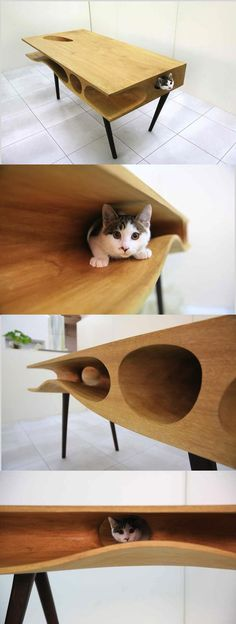 Cat lovers don't miss this! Shared Table Where People Can Work and Cats Can Wander