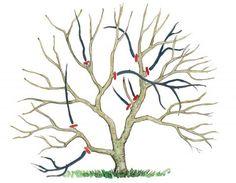 Magnolienschnitt Zeichnung