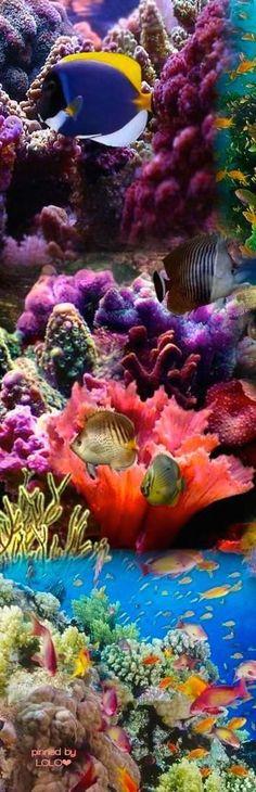 Mooie onderwaterwereld   Dat zie je niet elke dag.