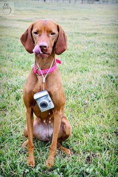 Self-portrait of a pet photographer