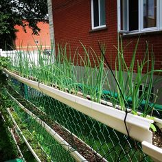 Did I tell you I love fresh spring onions and use lots of them?  A 10ft length of fence is enough to grow 2 crops of 1000 onions per season!#verticalfarming #urbanfarming #organicfarming #food #agriculture #urbangardenersrep #growsomethinggreen #epicgardening #urbanorganicgardener #gardeningtips #finegardening #urban_farming #gardening #beauty #summer #healthy #plantbased #butterfly #followme #Indoorgardening by theplantcharmer