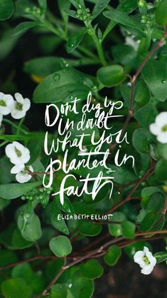 Don't dig up in doubt what you planted in faith ~Elisabeth Elliot