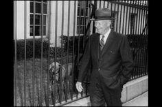 President Dwight Eisenhower walks by Heidi, his Weimaraner.