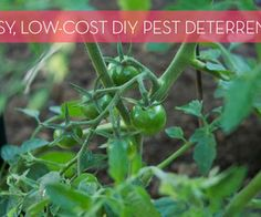 How to: Make Inexpensive, DIY All-Natural Pest Deterrents for Your Garden | Home Decor News