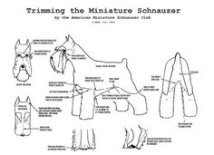 Grooming chart for the miniature