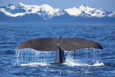 Whale tail (by Kjersti Busk Joergensen)