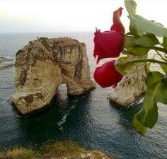 #goodafternnoon #raouche #beirut #livelovebeirut #flower