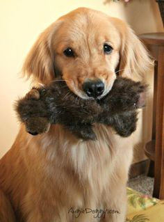 Looks like Annie with her Beaver :))