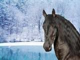 i love the difference of the strong black horse and the crisp white snow.