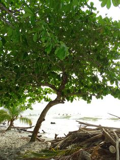 Las hojas que caen en las olas de mar