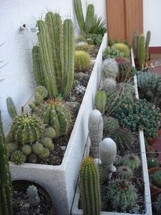 26 Best Delicious Yard Concepts Around The Globe Succulent Terrarium, Cacti And Succulents, Planting Succulents, Cactus Plants, Planting Flowers, Indoor Cactus Garden, Indoor Plants, Front Garden Landscape, Lily Garden