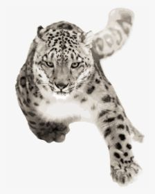Snow Leopard Running Hd Png Download Snow Leopard Leopard Png