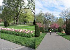 Boston Public Garden ~ Spring 2011