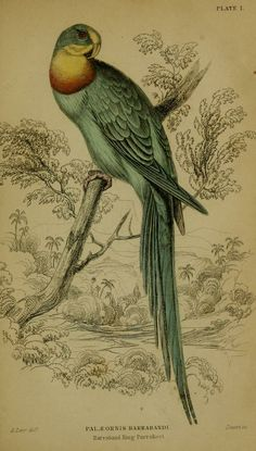 Natural history of parrots, P. J. Selby esq., 1836 [BHL]