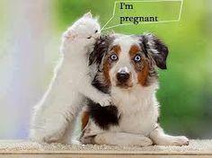 grappige dieren plaatjes - Google zoeken