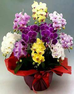 """""""A felicidade é a arte de fazer um buquê com as flores que estão ao seu alcance."""" Goddard"""
