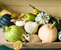 A colorful collection of gourds for a table centerpiece