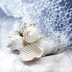 Sea Shells and bubbles..