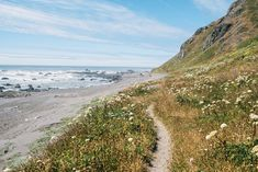 On California's Lost Coast: Sea Lions, Surf and Squiggly Roads - The New York Times California Travel, Northern California, The Places Youll Go, Places To Visit, Humboldt County, Pacific Coast, West Coast, Adventure Tours, Vacation Spots