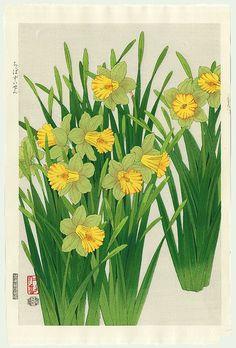 Daffodil by Nisaburo Ito