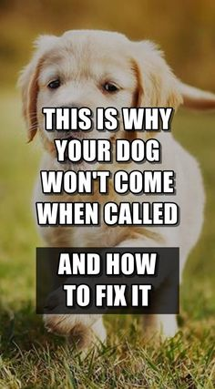 Does your dog come when called? Most dog don't. Find out how to get your dog to come when called ANYWHERE and EVERY TIME, without stressing out too much. #dogtraining #come