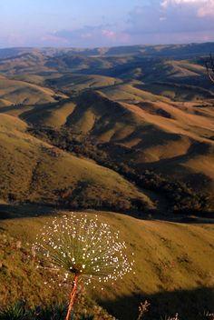 Uma paisagem típica de Minas Gerais: morros verdejantes. Serra da Canastra, estado de Minas Gerais, Brasil, e um espécime de Paepalanthus.  Fotografia: © André Dib no Flickr.