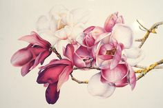 The colours in this Magnolia Botanical Study are delicate and feminine, the composition elegant while the element of yellow lichen adds interest and texture