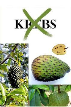 Soursop Fruit: Kills Cancer Cells Better Than Chemotherapy. Natural Cancer Cures, Natural Cures, Natural Health, Natural Medicine, Herbal Medicine, Soursop Fruit, Healthy Sport, Belleza Diy, Cancer Fighting Foods