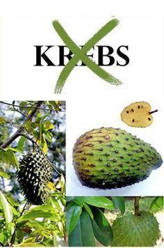 Mutter Natur ist immer noch die beste Apotheke, auch wenn die Pharmaindustrie dies wirksam zu vertuscht. Die Graviola – eine Tropenfrucht, die in Südamerika und der Karibik wachst, ist in der Lage,…