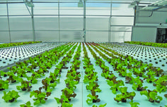 Grow Your Indoor Garden with the help of Hydroponic Gardening. Maxgrowshop sells high quality hydroponic grow products in entire Europe. Hydroponic Shop, Hydroponic Supplies, Hydroponic Farming, Grow Shop, Grow Kit, Grow Your Own Food, Grow Lights, Indoor Garden, Gardening Tips