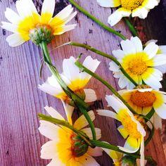 Daisy chain days...