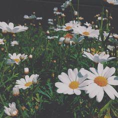 Pinterest: AngelicaRose