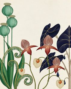 I also love this style of illustration illustration blume, nature illustration, botanical drawings, Illustration Art Drawing, Plant Illustration, Art Drawings, Vintage Illustration, Flower Drawings, Photo Illustration, Tattoo Drawings, Motifs Art Nouveau, Azulejos Art Nouveau