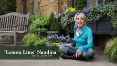 Vegetable Gardening Videos Southern Living Plant Collection Quick Garden Tip! Make your container plantings extra special by adding a shrub or small tree to make it look like a small garden! Garden design made easy with SLPC Quick Tips! Shade Perennials, Flowers Perennials, Container Flowers, Container Plants, Lemon Lime Nandina, Layout Design, Design Ideas, Quick Garden, Container Gardening Vegetables