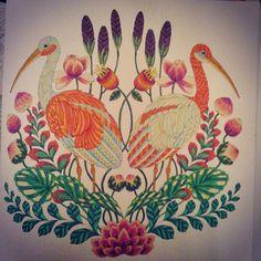 Adult Coloring Books Doodle Art Colored Pencils Tropical Wonderland Doodles Book Chance Livros