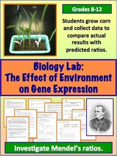 Genetics Lab for Biology or Life Science Class: The Effect of Environment on Gene Expression. Students grow corn to collect data on how the environment affects the expression of genetic traits. Biology Lessons, Ap Biology, Teaching Biology, Science Lessons, Life Science, High School Biology, Science Student, Middle School Science, Science Classroom