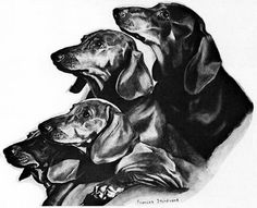 Love those doxies . . .